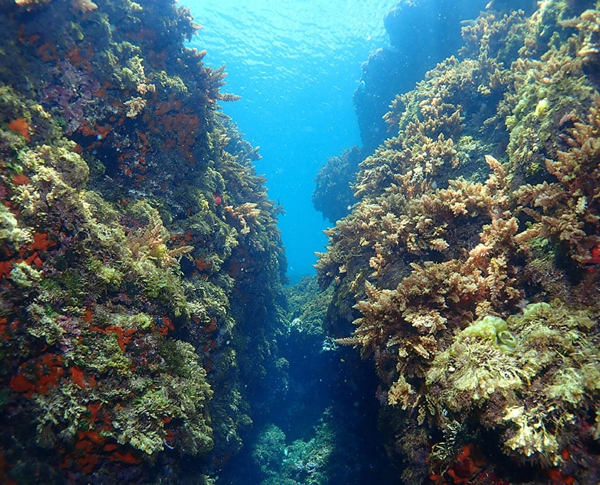 Scuba diving Tabarca